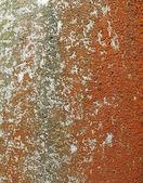 コンクリートの表面、自然の詳細に茶色の地衣. — ストック写真