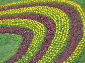 Çiçekler çeşitlilik, mevsimsel doğal ayrıntılar yığın. — Stok fotoğraf