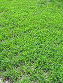 New green leafs, grass, ecology, meadow — 图库照片