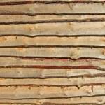Yellow pine tree wall, textured background — Stock Photo