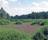 绿色的植物,紫的花,蓝色天空 — 图库照片