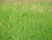 年轻的绿草背景、 草甸、 性质 — 图库照片