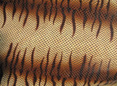 Closeup snakeskin texture, danger leather skin concept. — Stock Photo