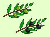 Olive brunch — Stock Vector