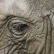 African elephant eye — Stock Photo