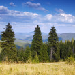 Summer mountain landscape — Stock Photo