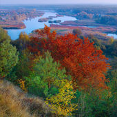 Autumn view at the river — Stockfoto