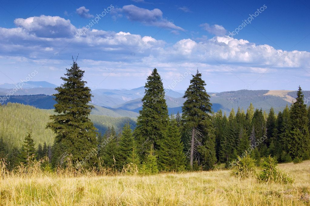 Summer landscape in mountains. A mountain valley with pines and the blue sky — Stock Photo #2838921