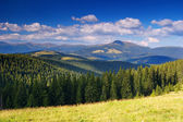 Summer landscape in mountains — Stock Photo
