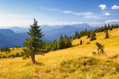 Summer mountain landscape — Stockfoto
