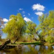 Stock Photo: Trees near pond in spring