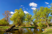 Trees near a pond in the spring — Stock Photo