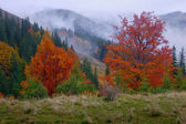 Autumn in wood — Stock Photo