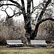 Two benches in massandra garden - Stock Photo