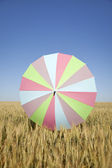 Umbrella at wheat field — Photo