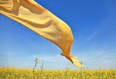 Silk on wind at rape field — Stock Photo