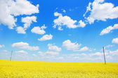Oilseed rape, field — Stock Photo