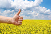 Farmers hand symbolizes a good harvest — Stock Photo