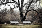 Dwie ławki w ogrodzie massandra — Zdjęcie stockowe