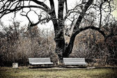 Two benches in massandra garden — Stock Photo