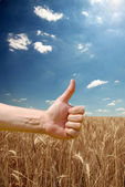 Farmer's hand symbolizes a good harvest — Stock Photo