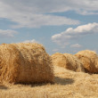 Golden Hay Bales in the countryside — Stock Photo #3582797