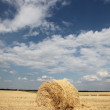 Golden Hay Bales in the countryside — Stock Photo #3582838