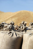 Sack with wheat at outside — Stock Photo