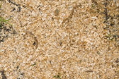 Texture of sawdust (debris of timber) cover grass — Stock Photo