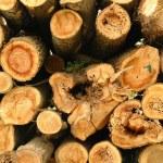 Pile of pine tree logs — Stock Photo