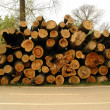 Pile of pine tree logs — Stockfoto