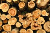 Pilha de troncos de árvore de pinho — Foto Stock