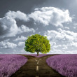 Crossroad in lavender meadow — Stock Photo