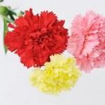 Carnations — Stock Photo