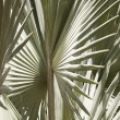 The palm foliage — Stock Photo