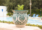 Pot with plant in the Morocco garden — Stock Photo