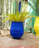 Majorelle gardens, marrákeš, maroko — Stock fotografie
