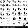 Collection of animal and bird trails — Imagen vectorial