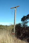 Yeni kutup — Stok fotoğraf