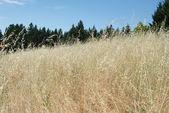коричневый трав — Стоковое фото