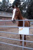Don't Feed The Horses — Stock Photo
