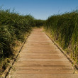 Boardwalk — Stock Photo