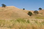 Brown hills — Stock Photo