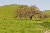 树木 — 图库照片