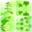 Collage of grenn leaves — Stock Photo