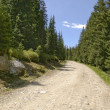 Stock Photo: Mountain gravel road