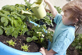 Little boy watering his garden — Stock Photo