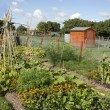 Stock Photo: Allotment