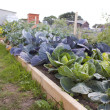 Stock Photo: Allotment in summer