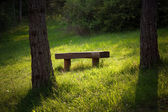 Bench in a forest — Stock Photo
